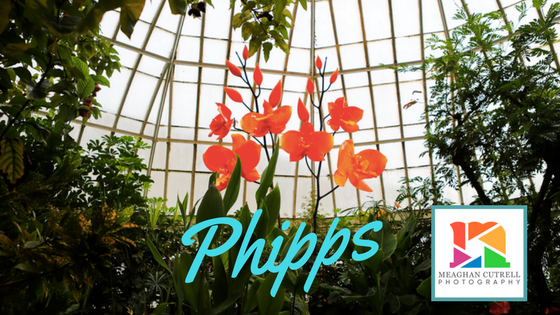 Phipps photography Pittsburgh